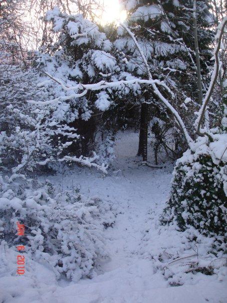 woods snow