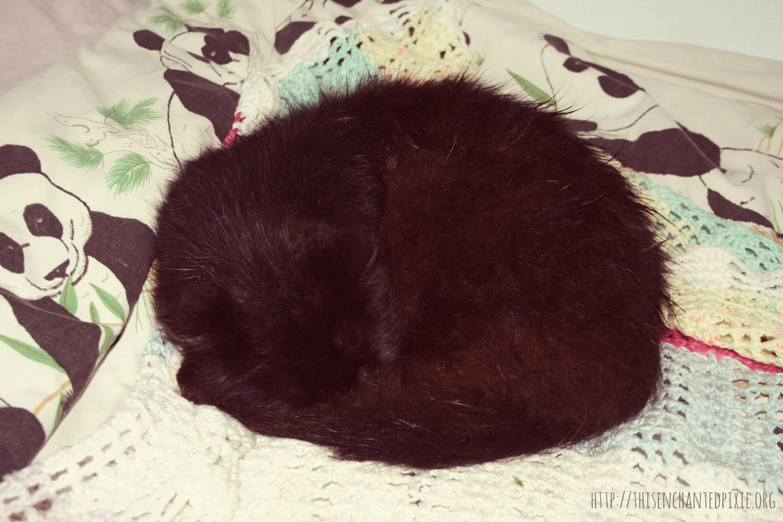 Mr Bear sleeping cat
