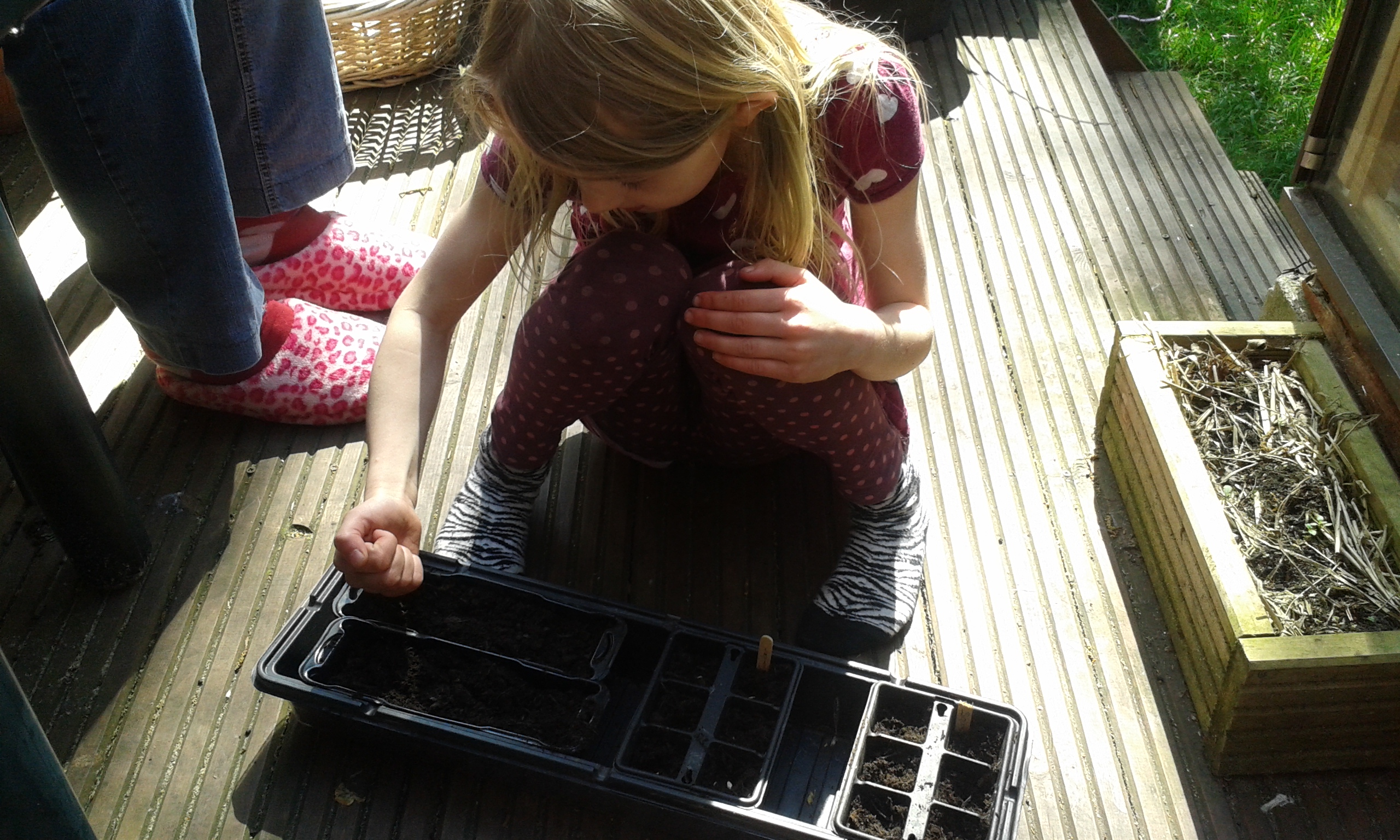 sowing seeds