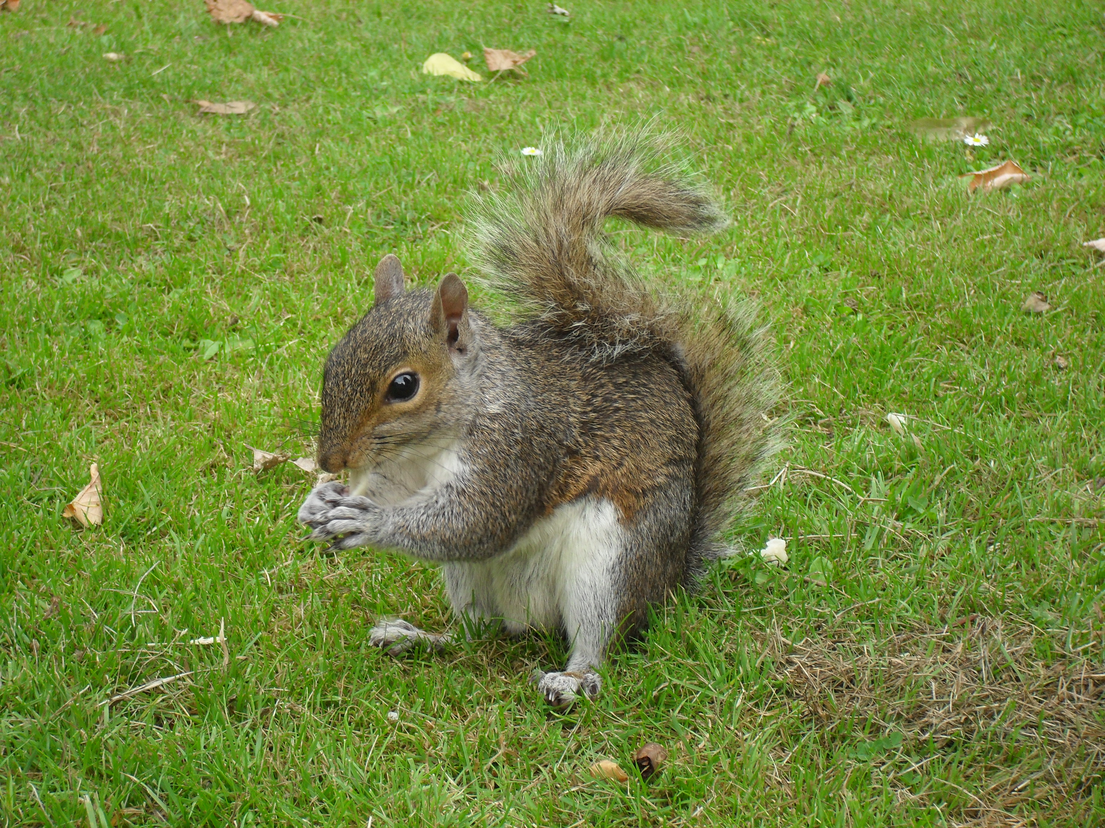 friendly squirel