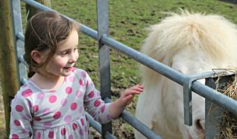 folly farm baya pony