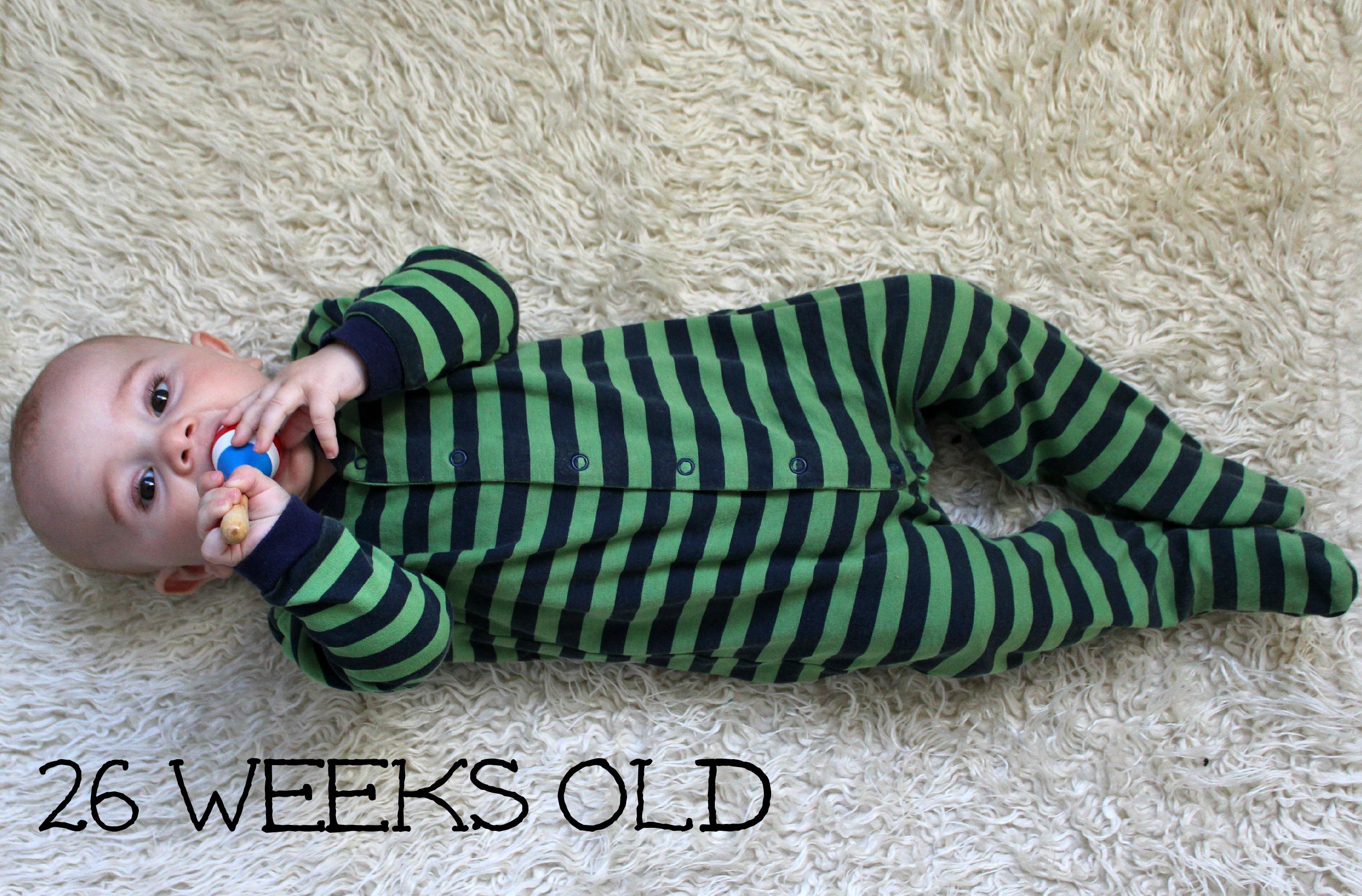 vega 26 weeks old