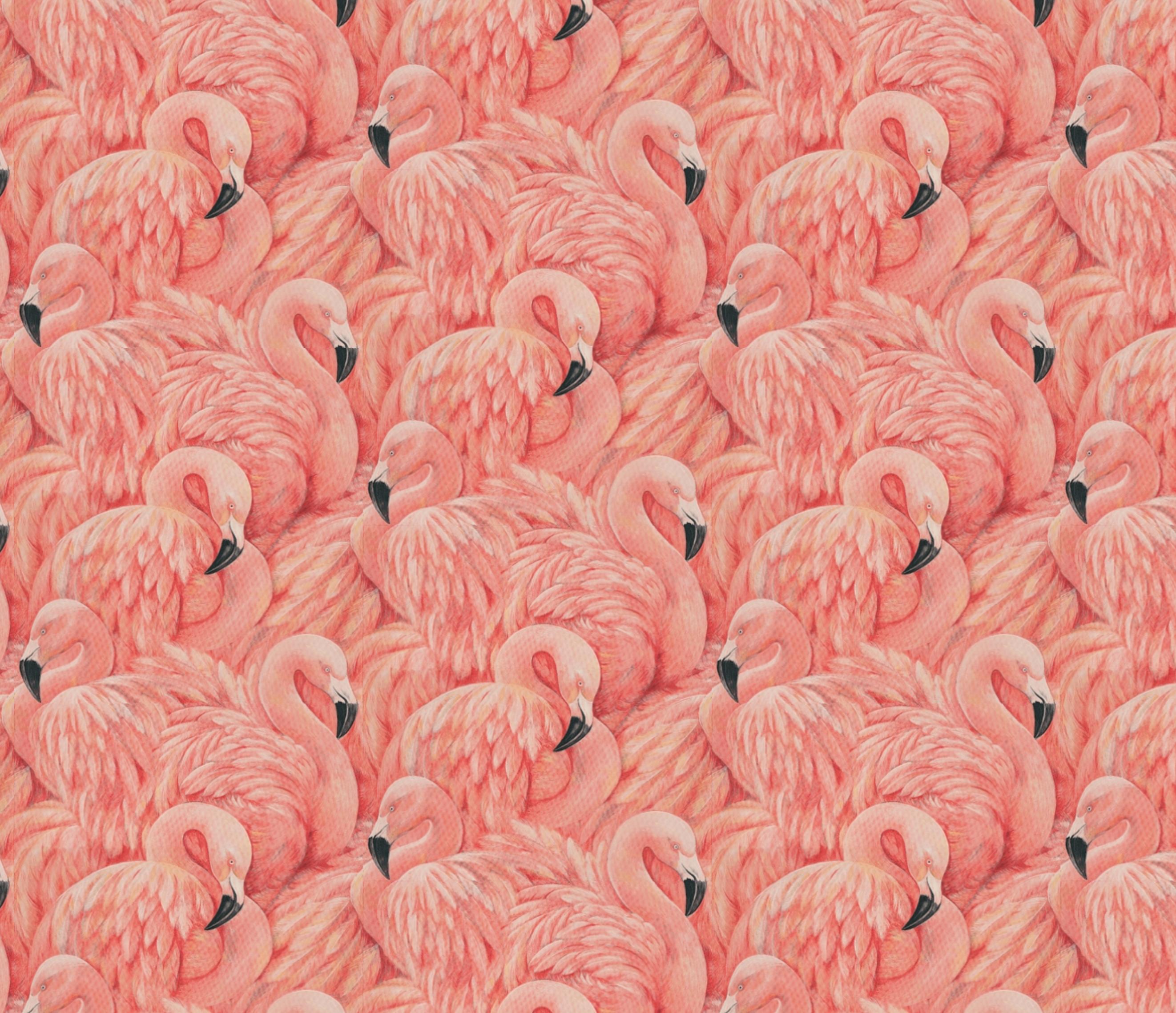 Albany flamingos
