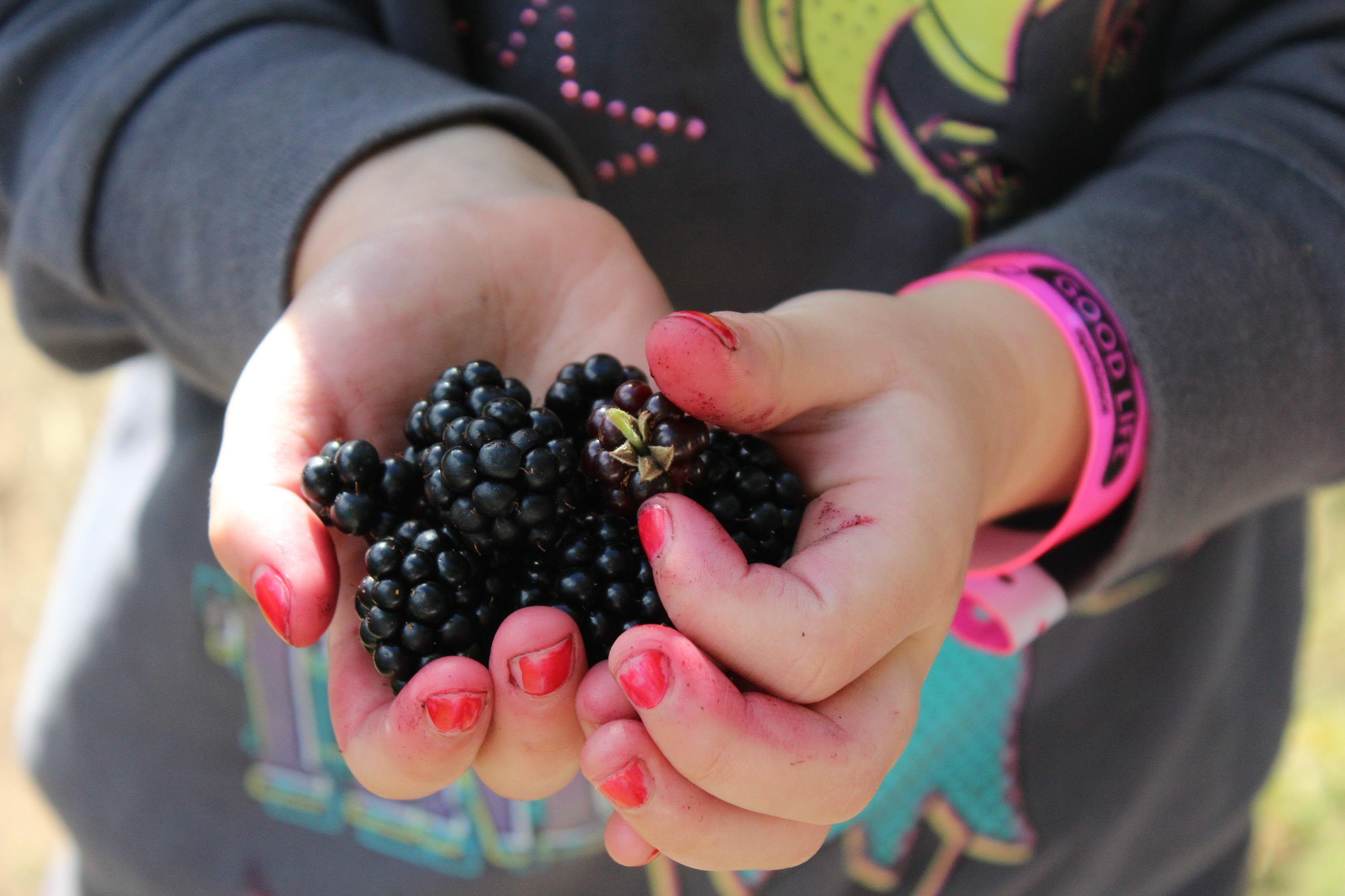 blackberries-good-life-experience