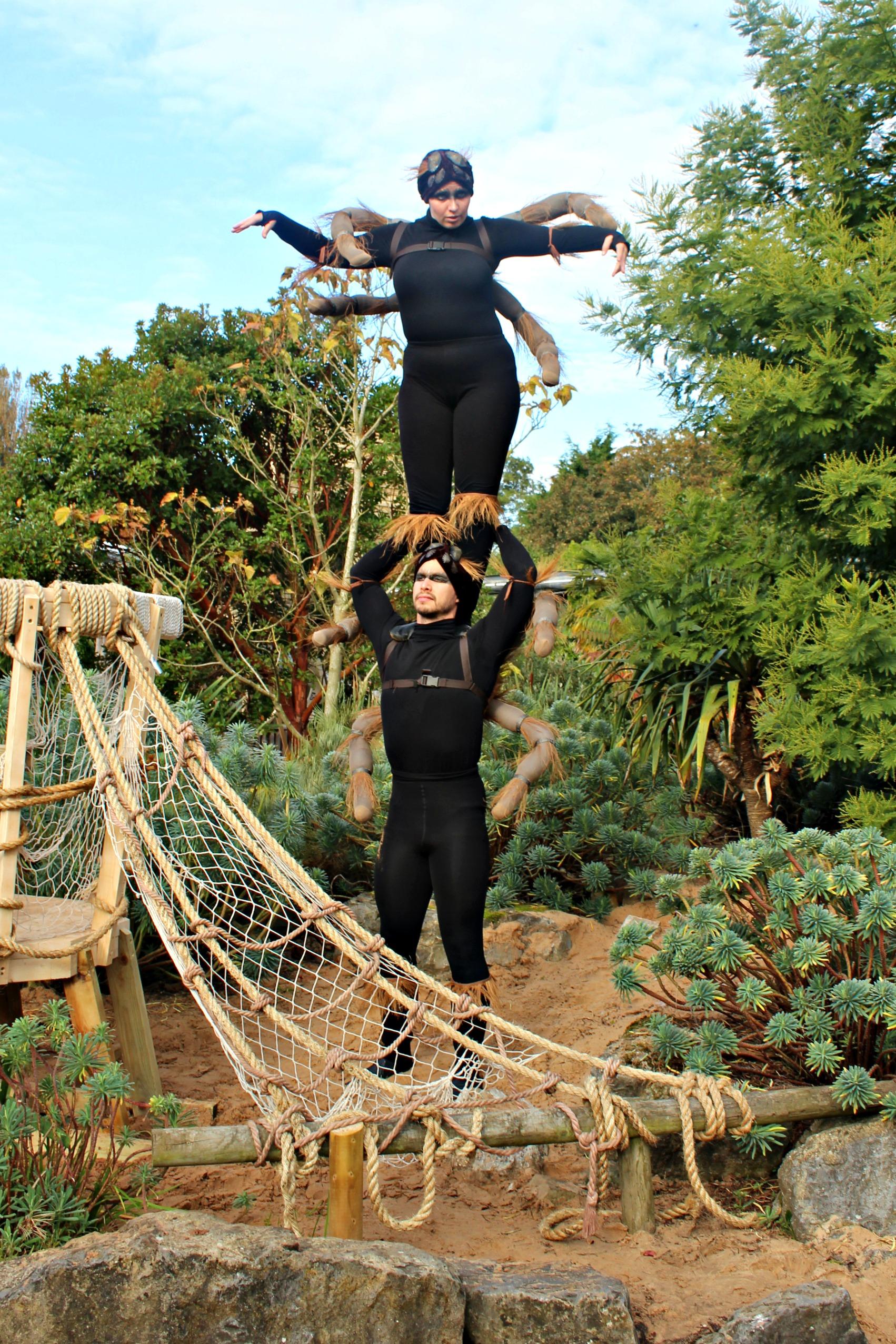 tarantulas-enchantment-of-chester-zoo