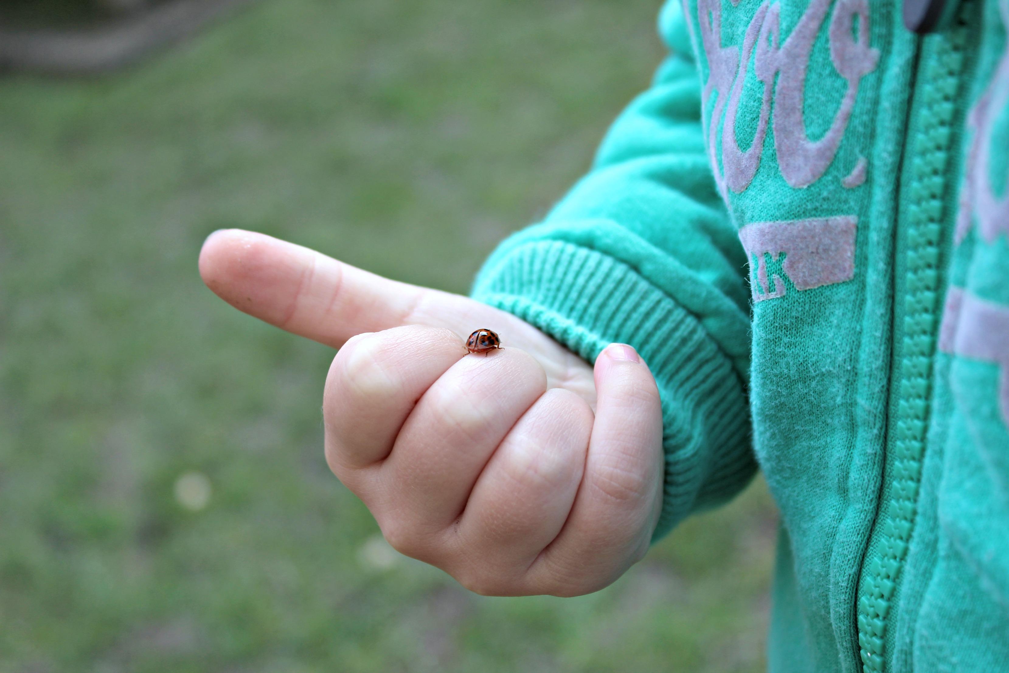 ladybird-this-homeschooling-life-15
