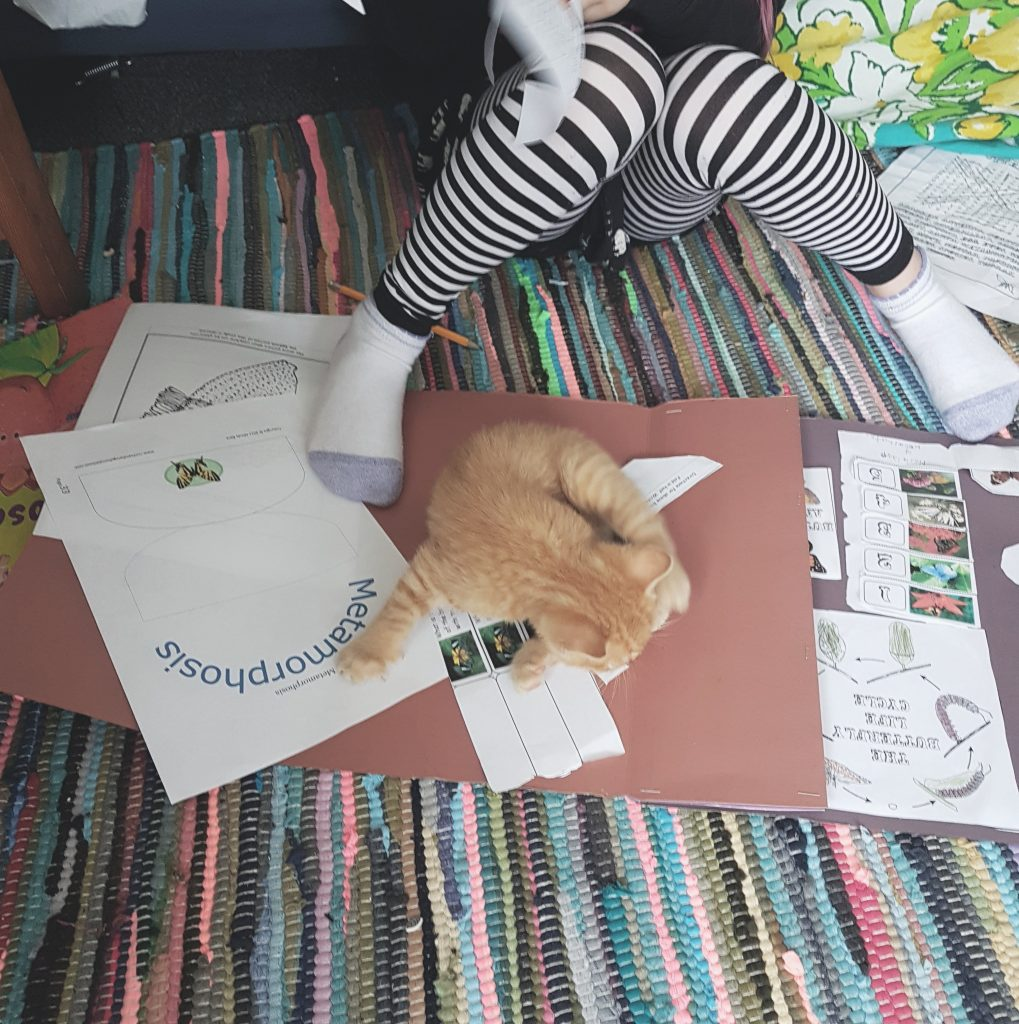 this-homeschooling-life-kitties
